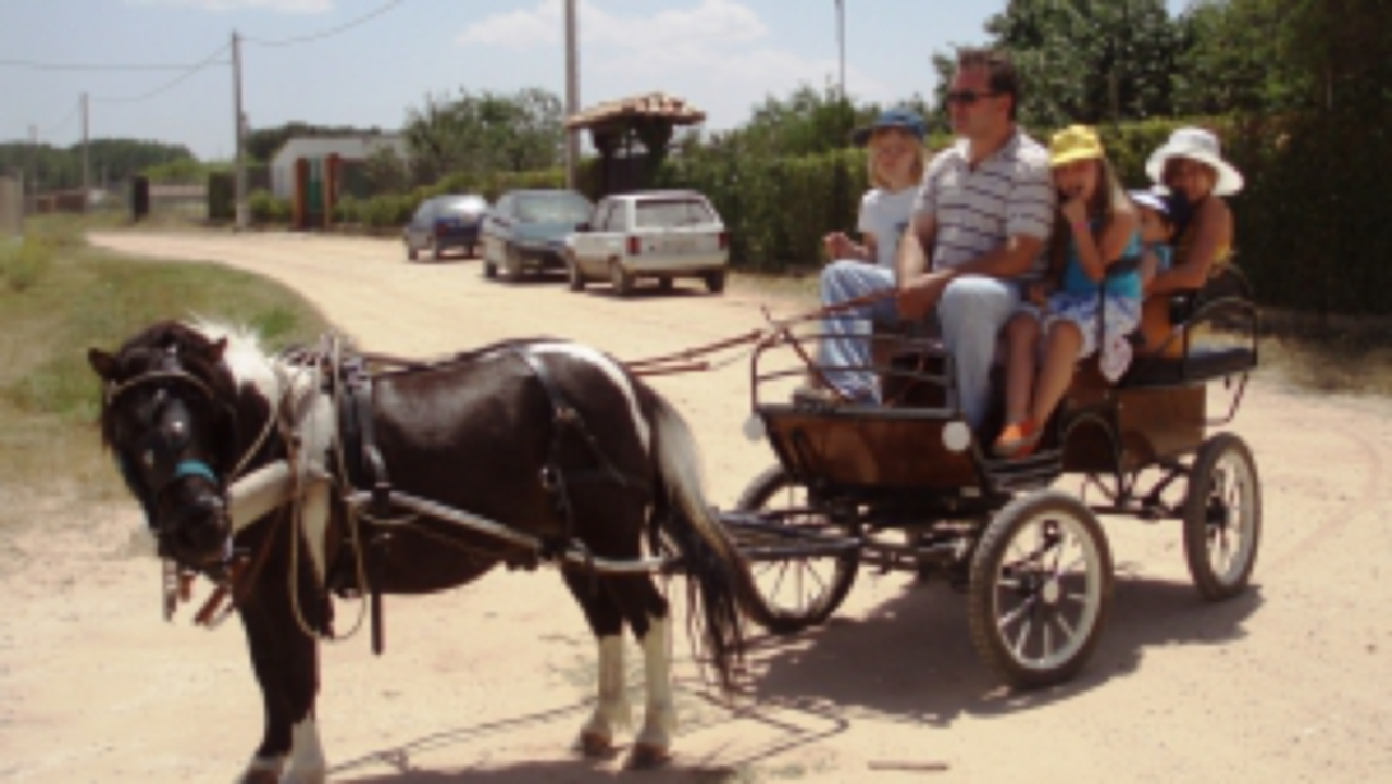 with pony rides , chickens , goats , kids activities , adventure tourism , home , rural , family , nature , animals, farm